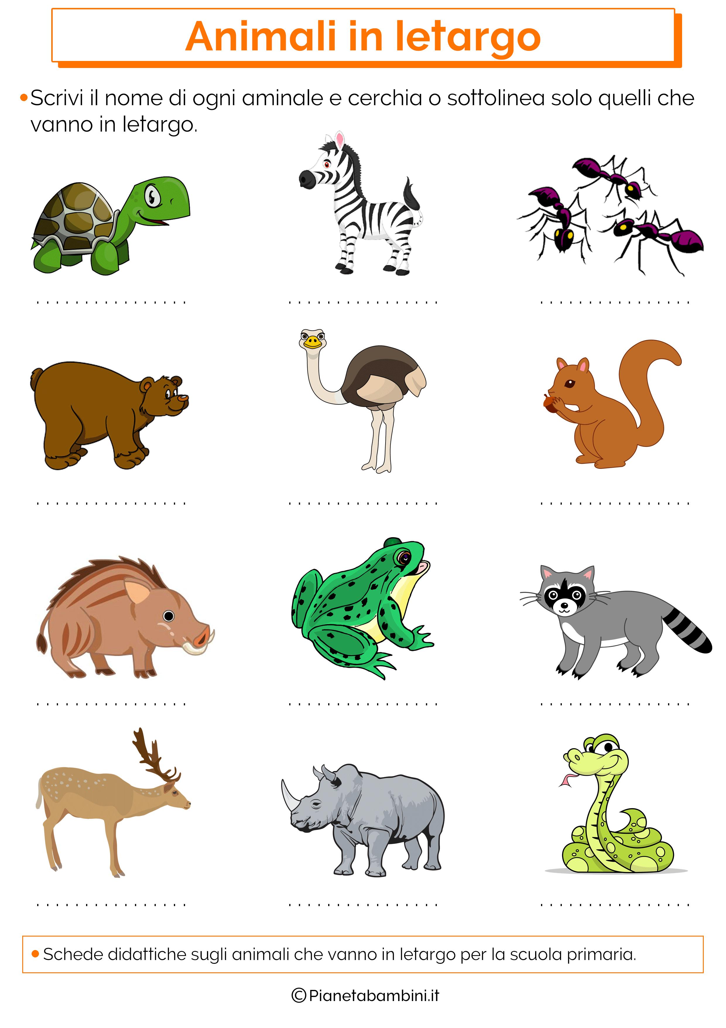 schede-didattiche-animali-letargo-1