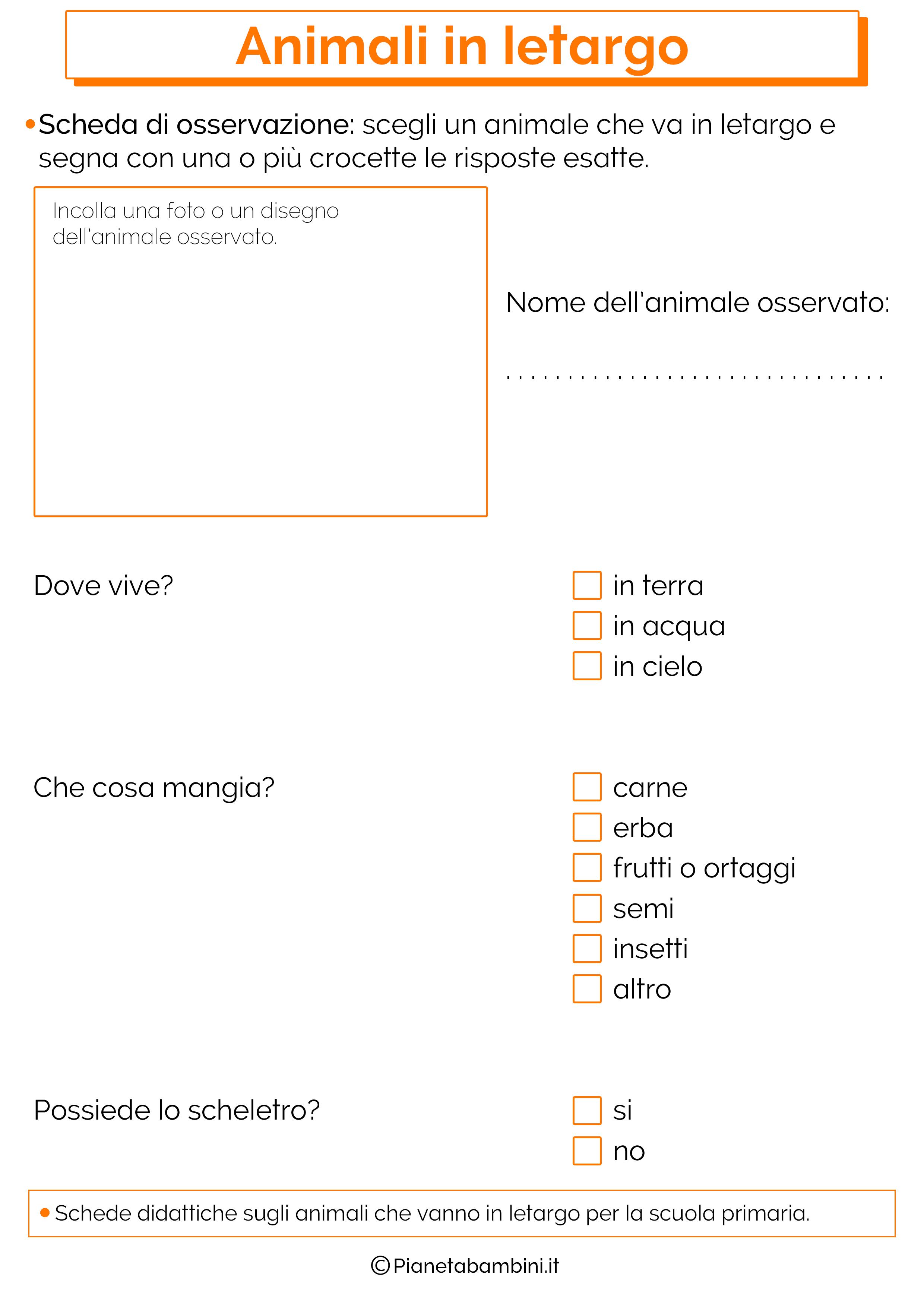 schede-didattiche-animali-letargo-4