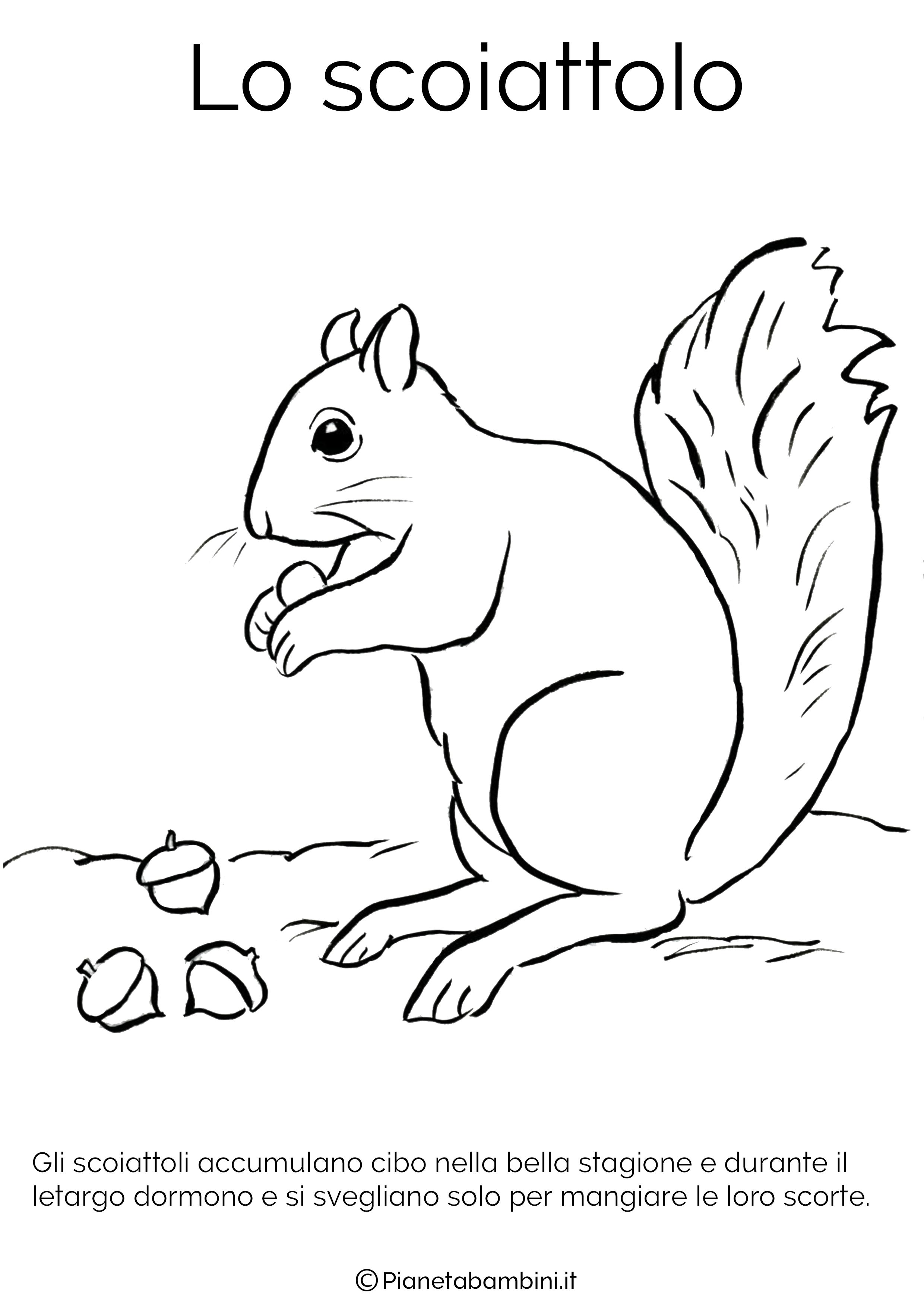 Disegno dello scoiattolo in letargo da colorare