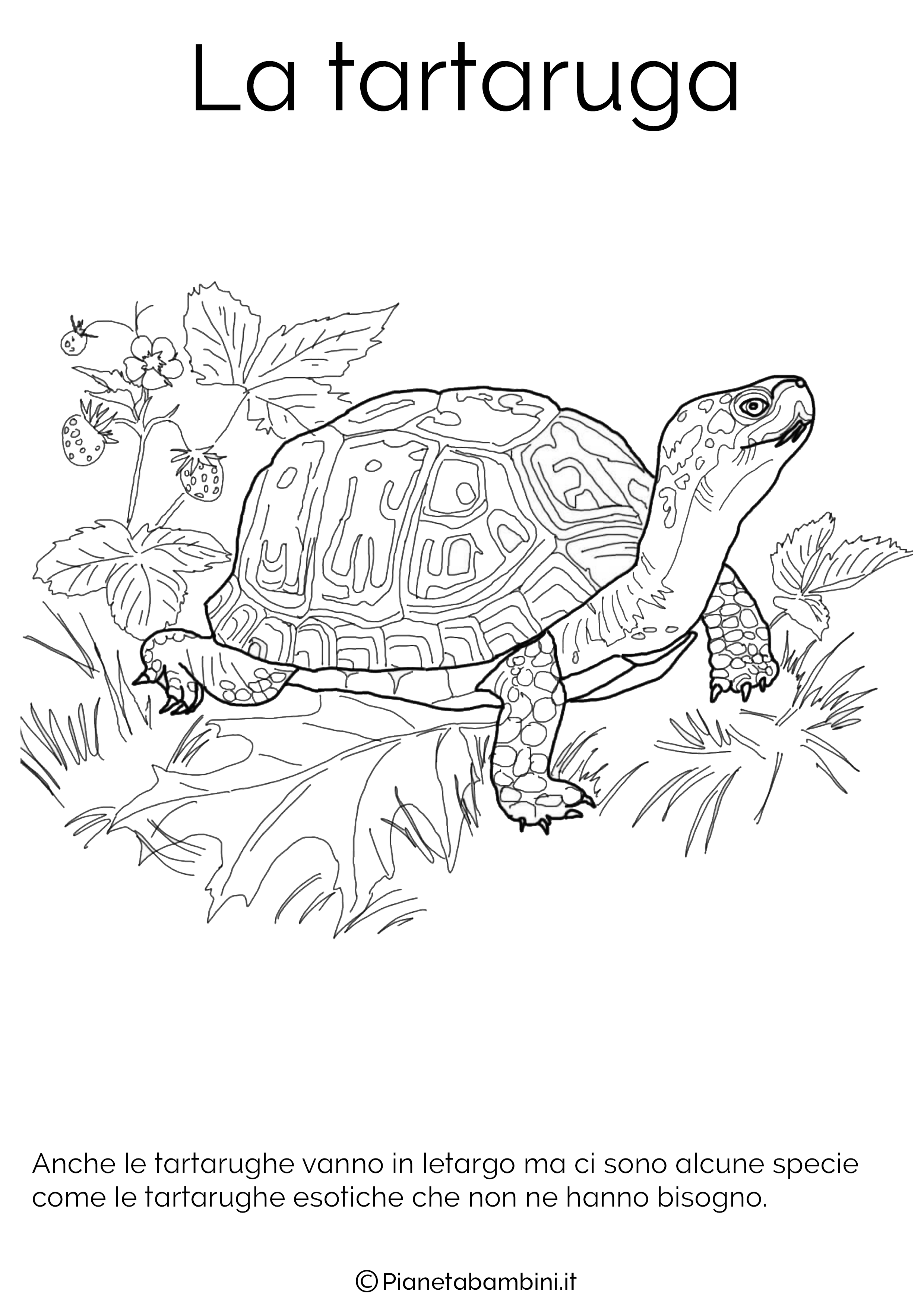 Disegno della tartaruga in letargo da colorare
