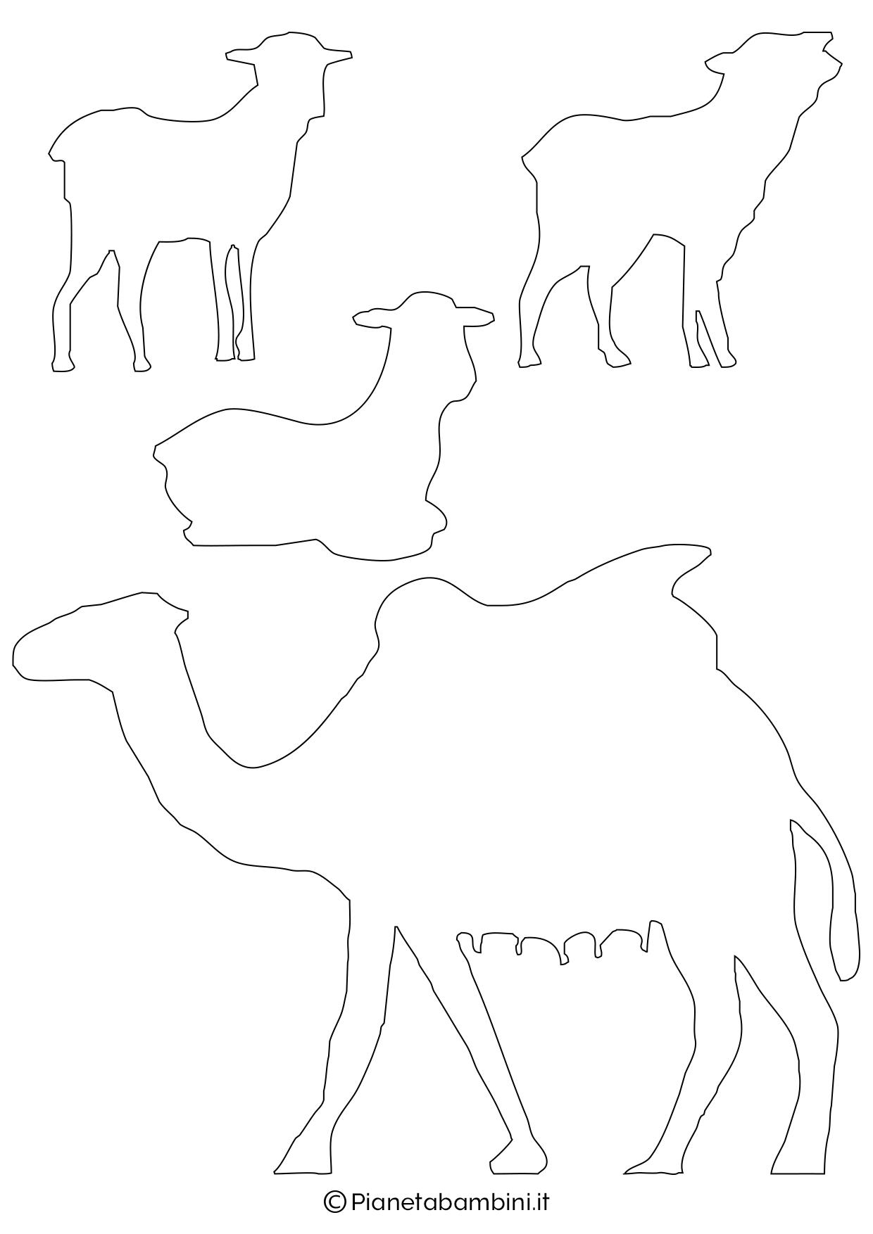 Cammello e pecorelle
