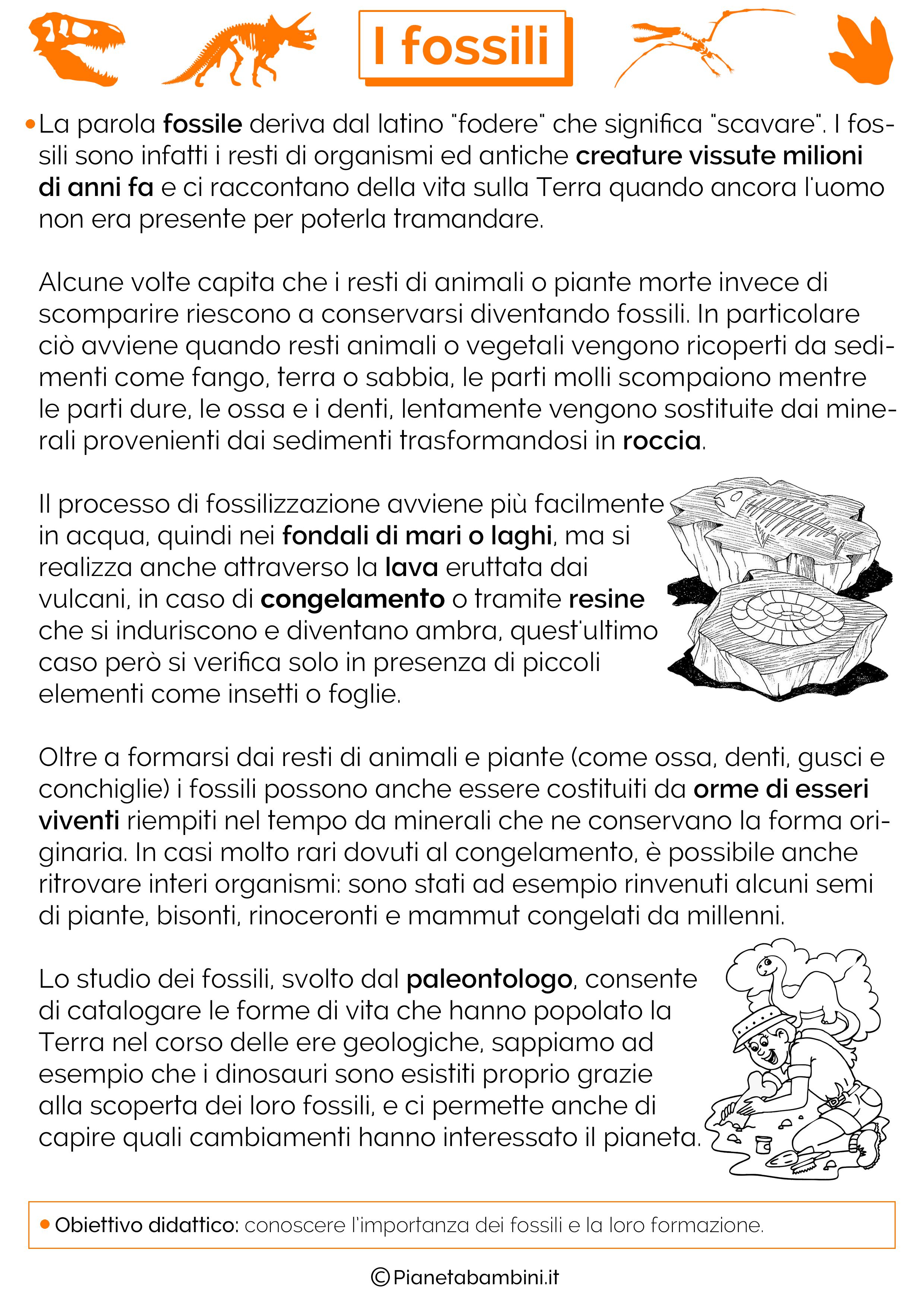 I Fossili Schede Didattiche Per La Scuola Primaria Pianetabambini It