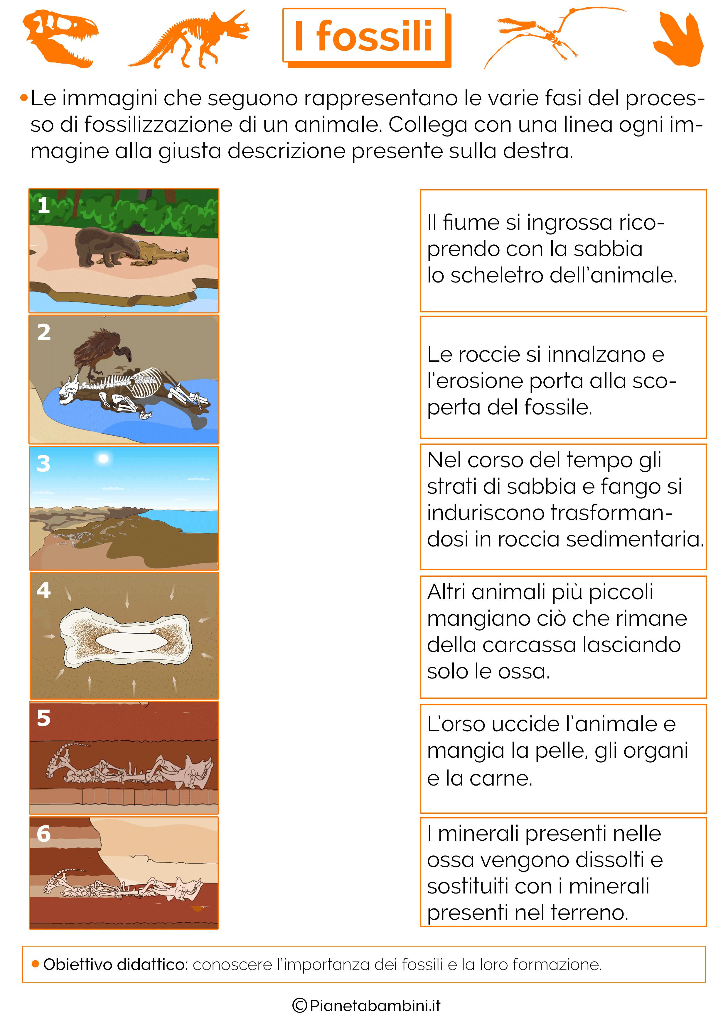 Conosciuto I Fossili: Schede Didattiche per la Scuola Primaria  ZE37