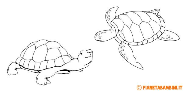Risorse educative e divertenti per bambini for Letargo tartarughe acqua
