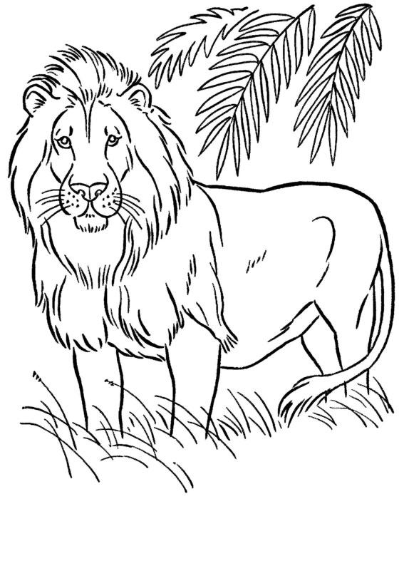 Disegni Da Colorare Animali Leone