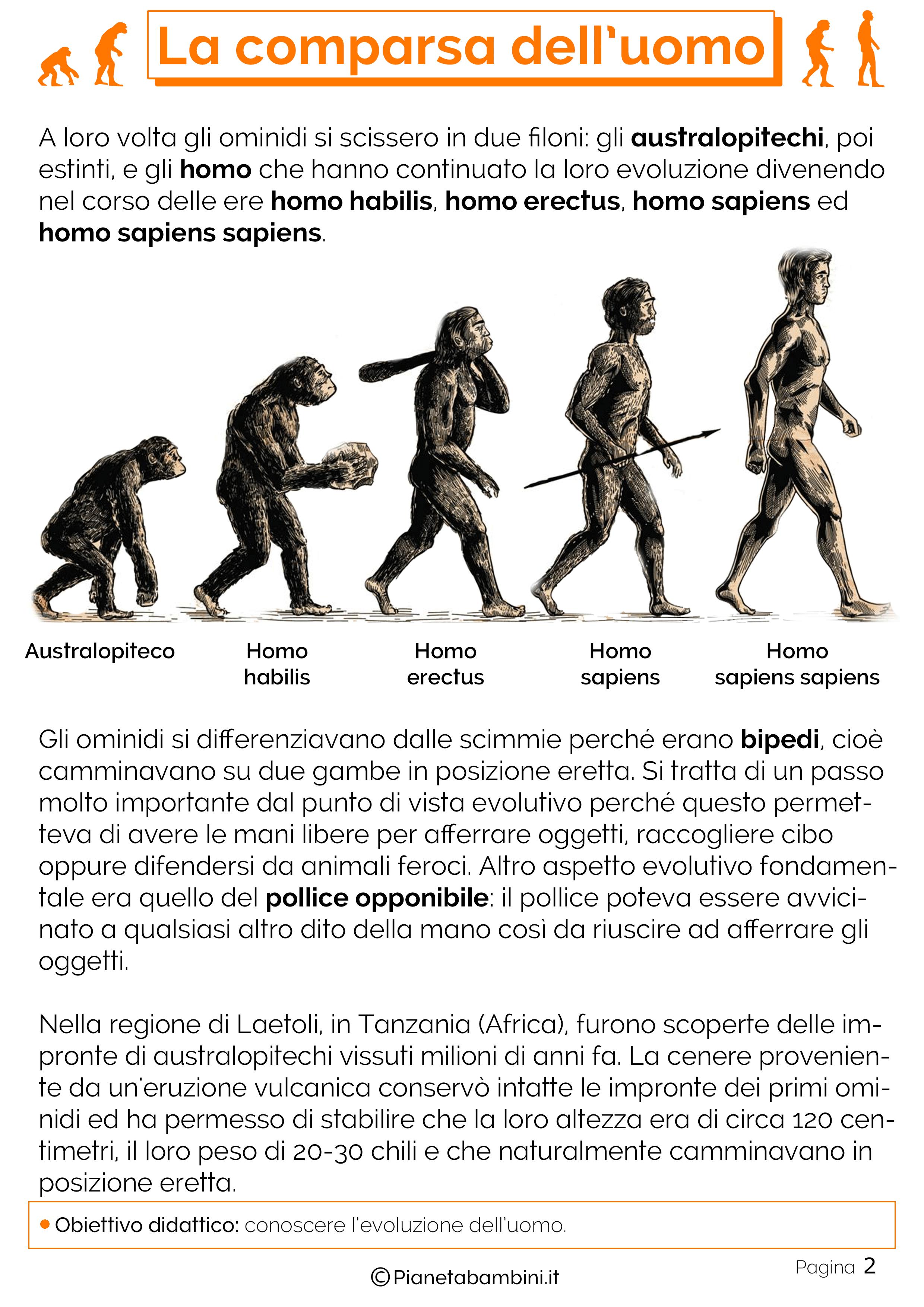 Esercizi sulla comparsa dell'uomo 2