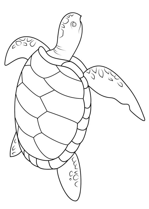 30 disegni di tartarughe da colorare for Disegni marini da colorare