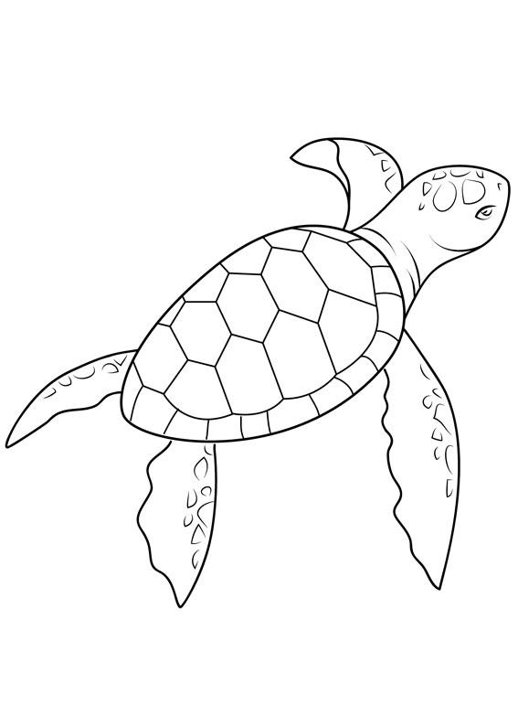 30 disegni di tartarughe da colorare for Immagini di animali marini da stampare