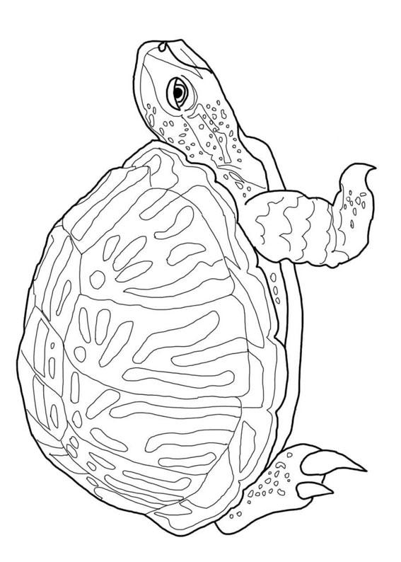 30 disegni di tartarughe da colorare for Disegno terra da colorare