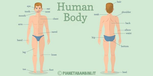 Schede didattiche sulle parti del corpo in inglese da stampare gratis