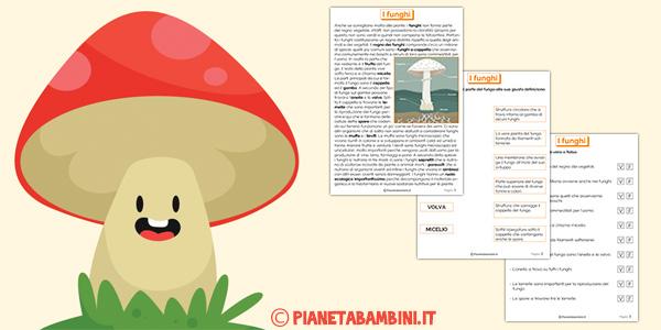 Teoria ed esercizi sui funghi per la scuola primaria