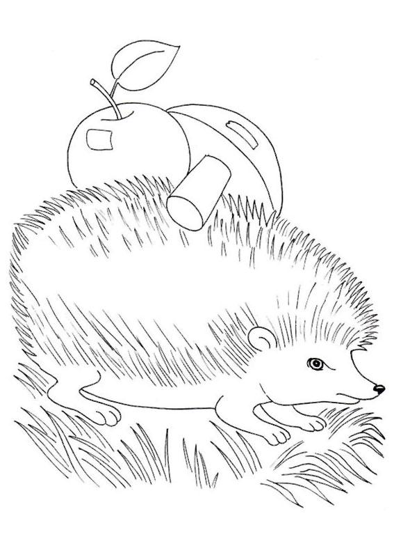 Riccio disegno per bambini qi21 regardsdefemmes for Riccio da colorare
