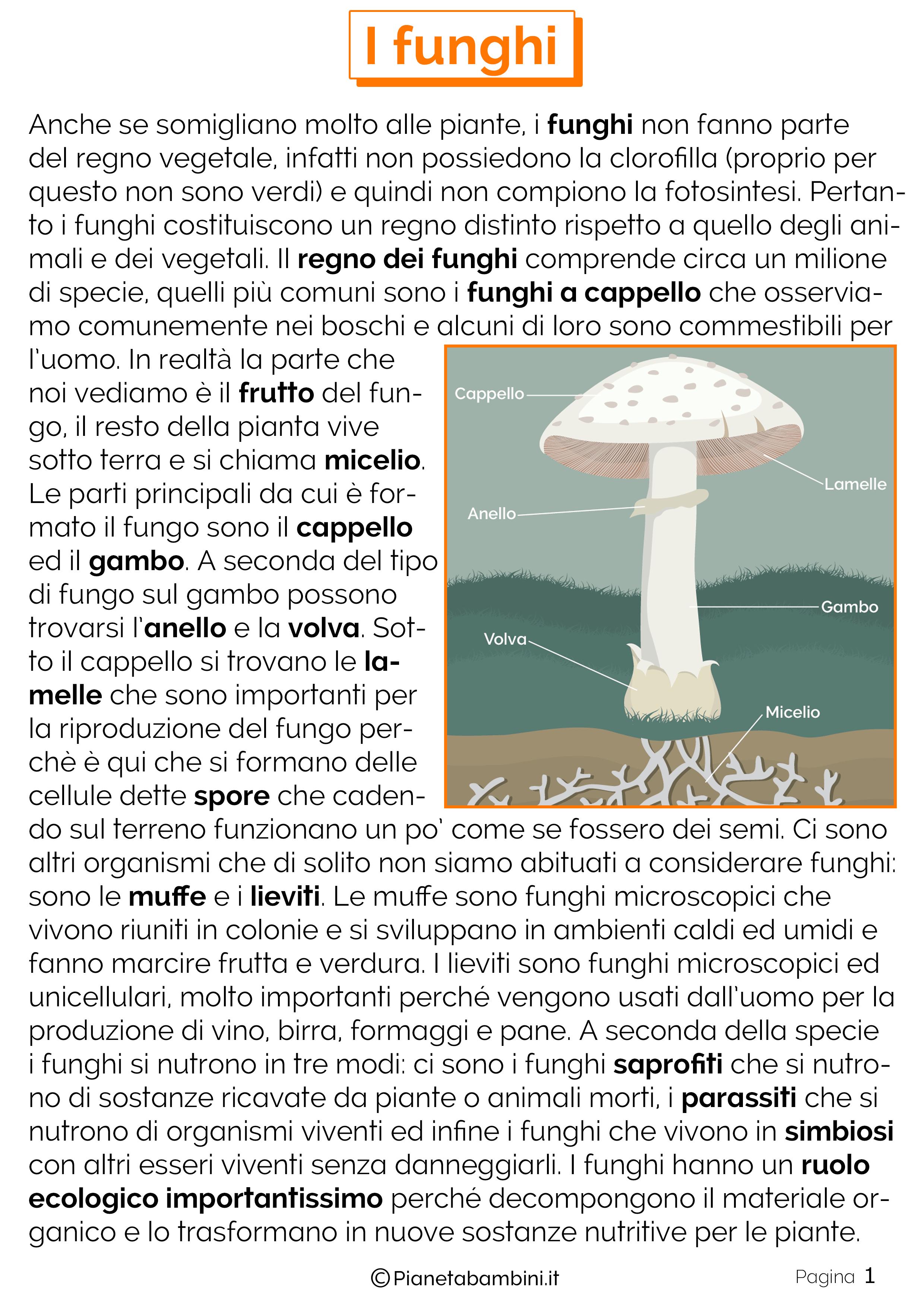 Teoria sui funghi