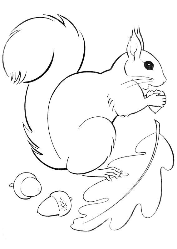 30 disegni di scoiattoli da colorare for Immagini di polipi da colorare