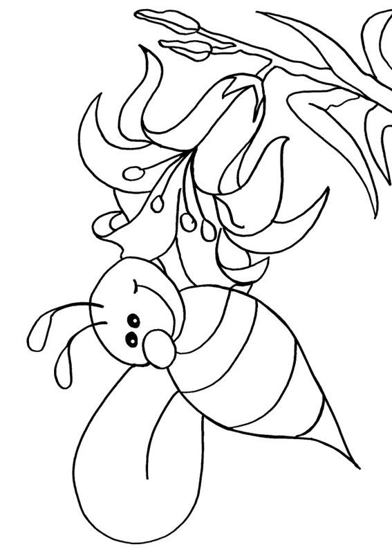 Disegno di ape 10
