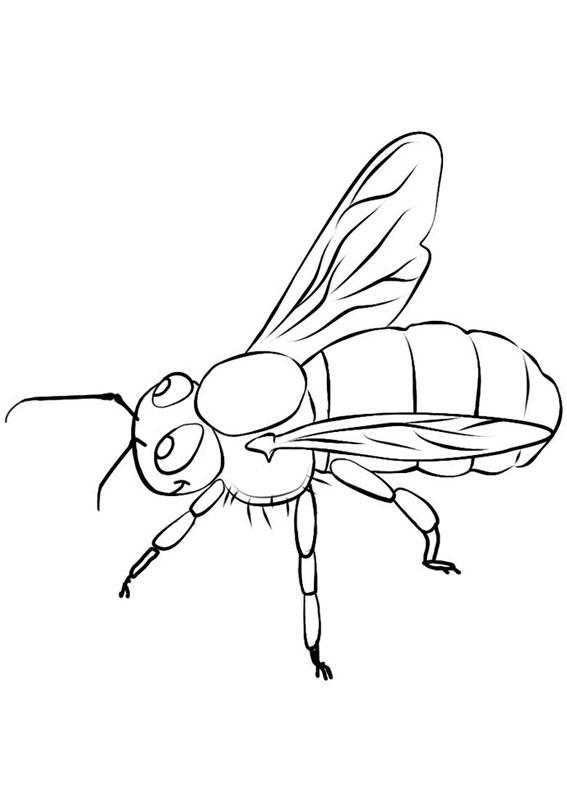 Disegno di ape 14