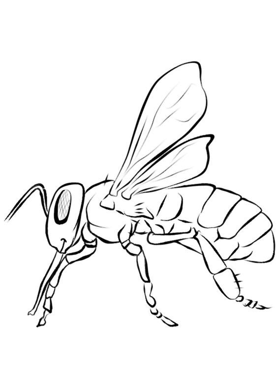 Disegno di ape 18