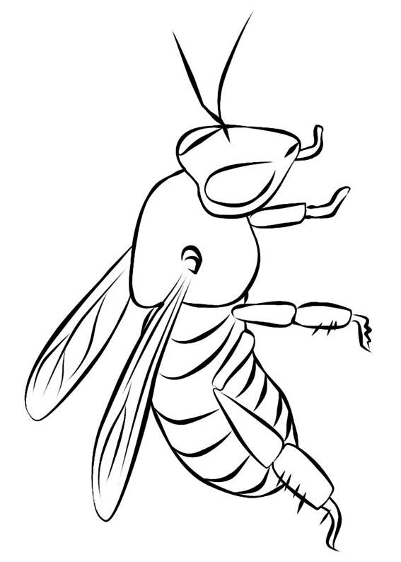 Disegno di ape 21