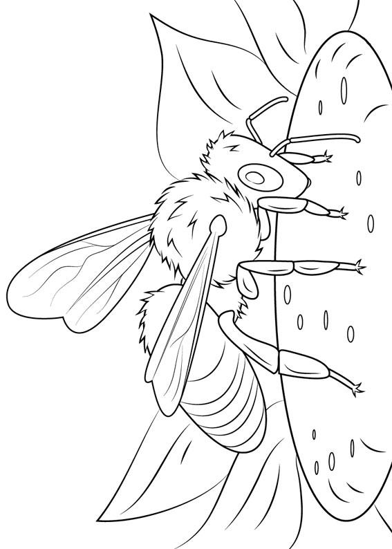 Disegno di ape 23