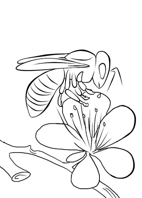Disegno di ape 25