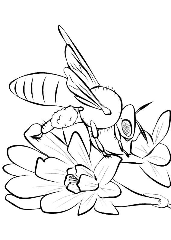 Disegno di ape 26
