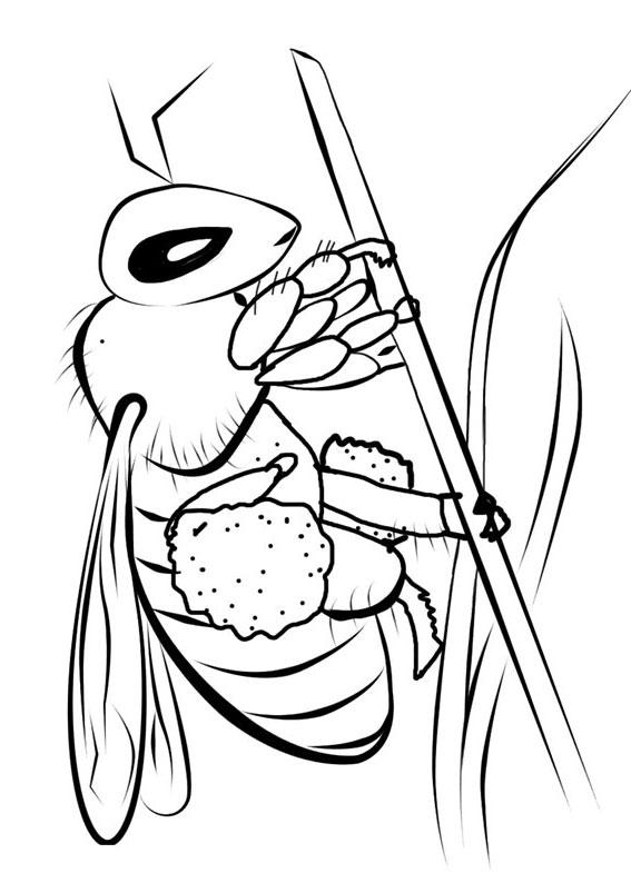 Disegno di ape 28