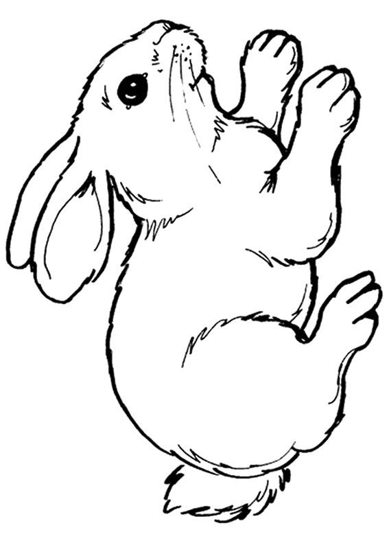 Disegno di coniglio da colorare 01