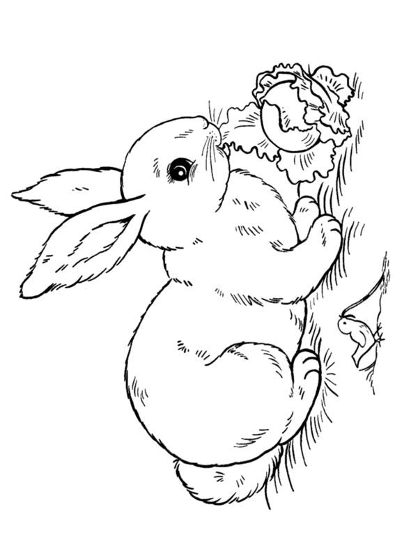 Disegno di coniglio da colorare 07
