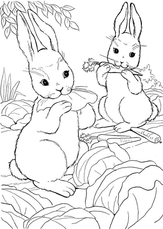 Disegno di coniglio da colorare 09