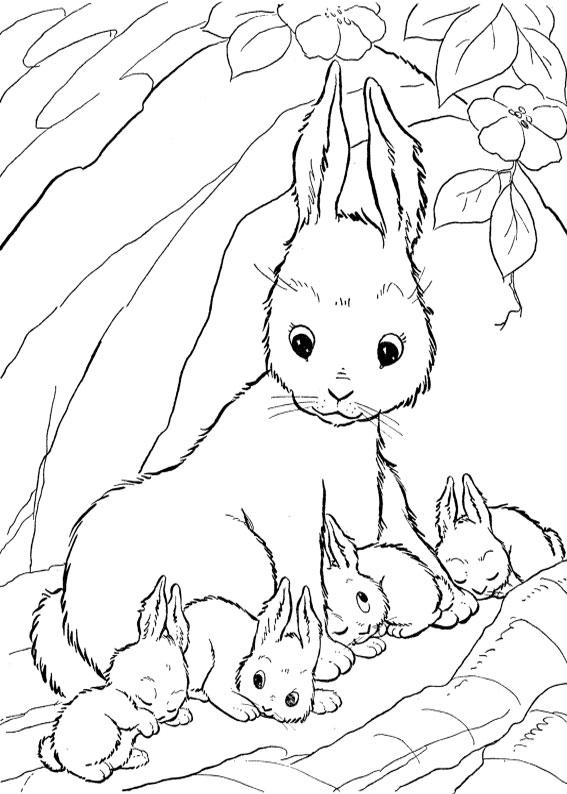 Disegno di coniglio da colorare 10