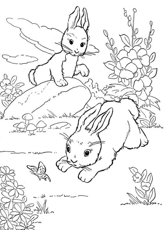 Disegno di coniglio da colorare 11