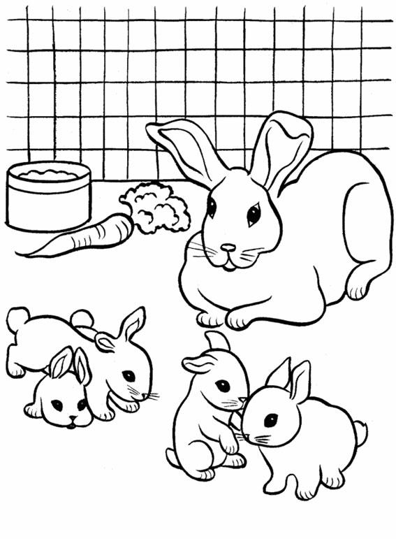 Disegno di coniglio da colorare 12
