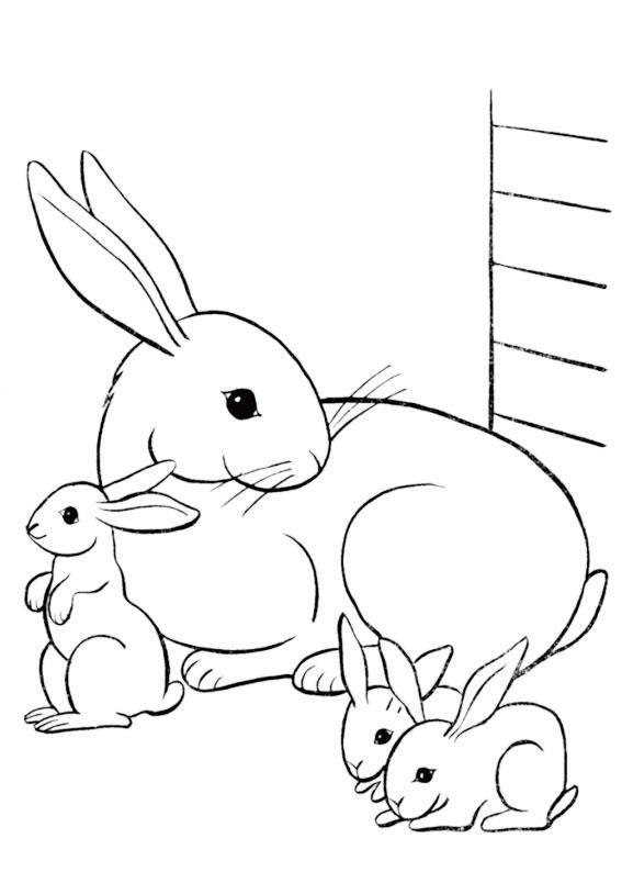 Disegno di coniglio da colorare 13