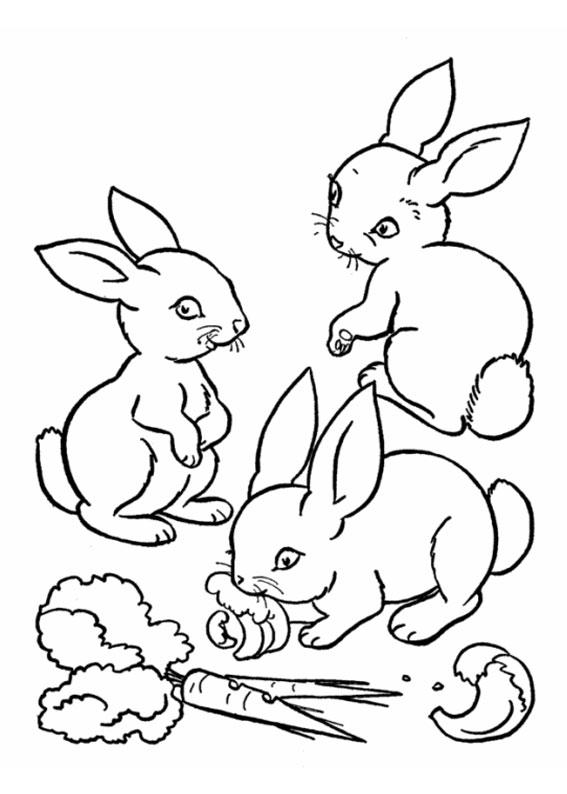 Disegno di coniglio da colorare 14
