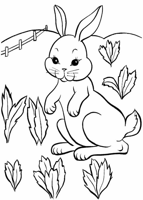 Disegno di coniglio da colorare 15