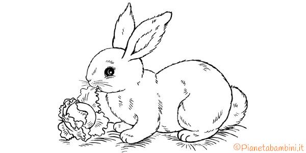 Disegni di conigli da stampare gratis e colorare