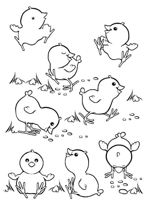 Disegni di pulcini Cartoon da colorare 13