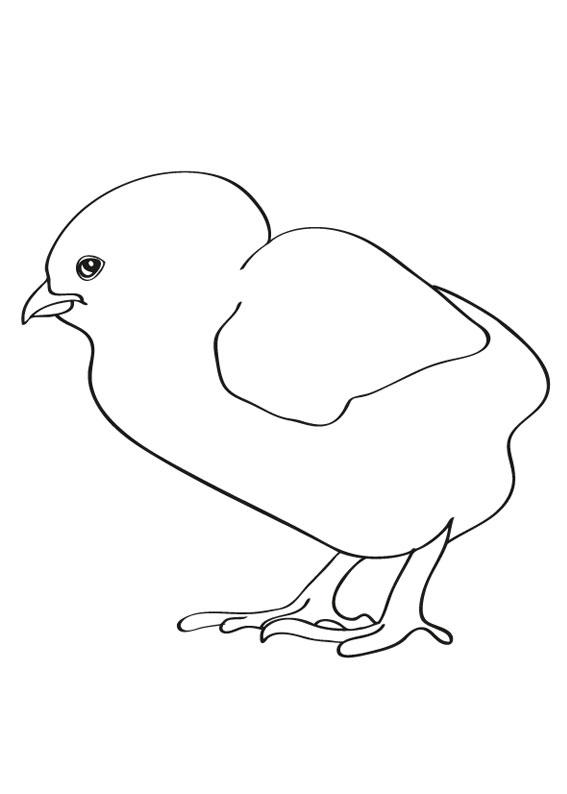 Disegno di pulcino da colorare 03