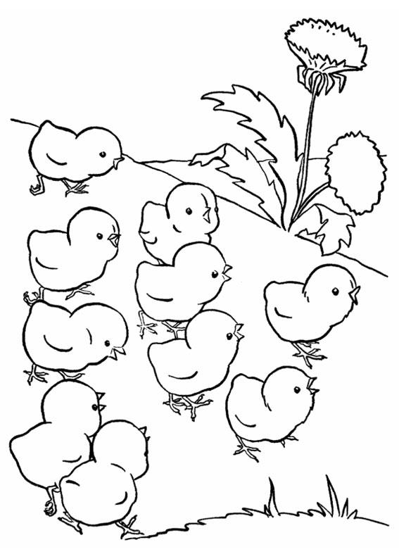 Disegno di pulcino da colorare 09