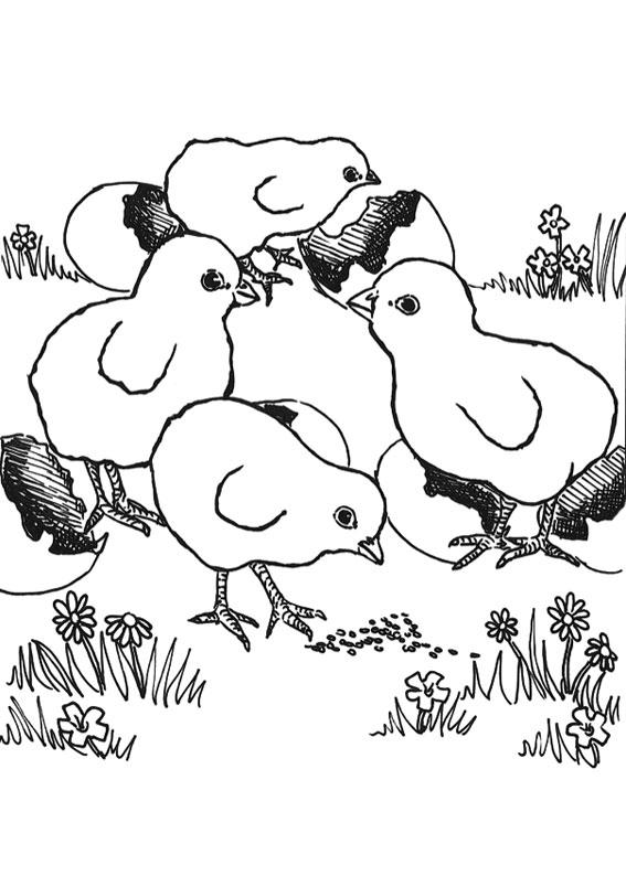 Disegno di pulcino da colorare 10