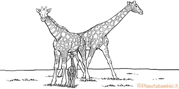 Disegni di giraffe da stampare e colorare
