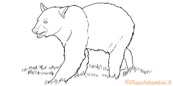 Disegni di orsi da stampare e colorare