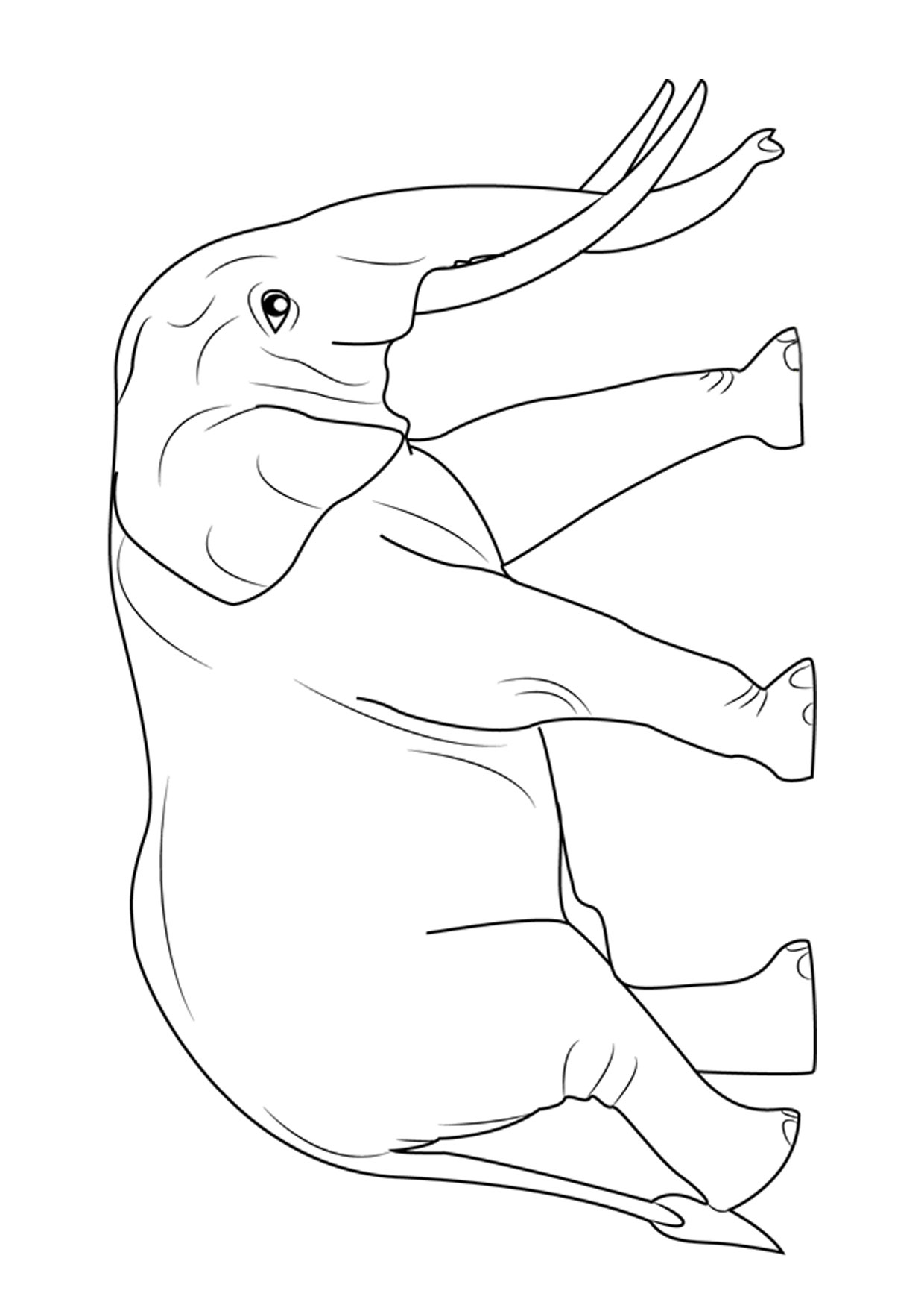 Disegno di elefanti da colorare 02