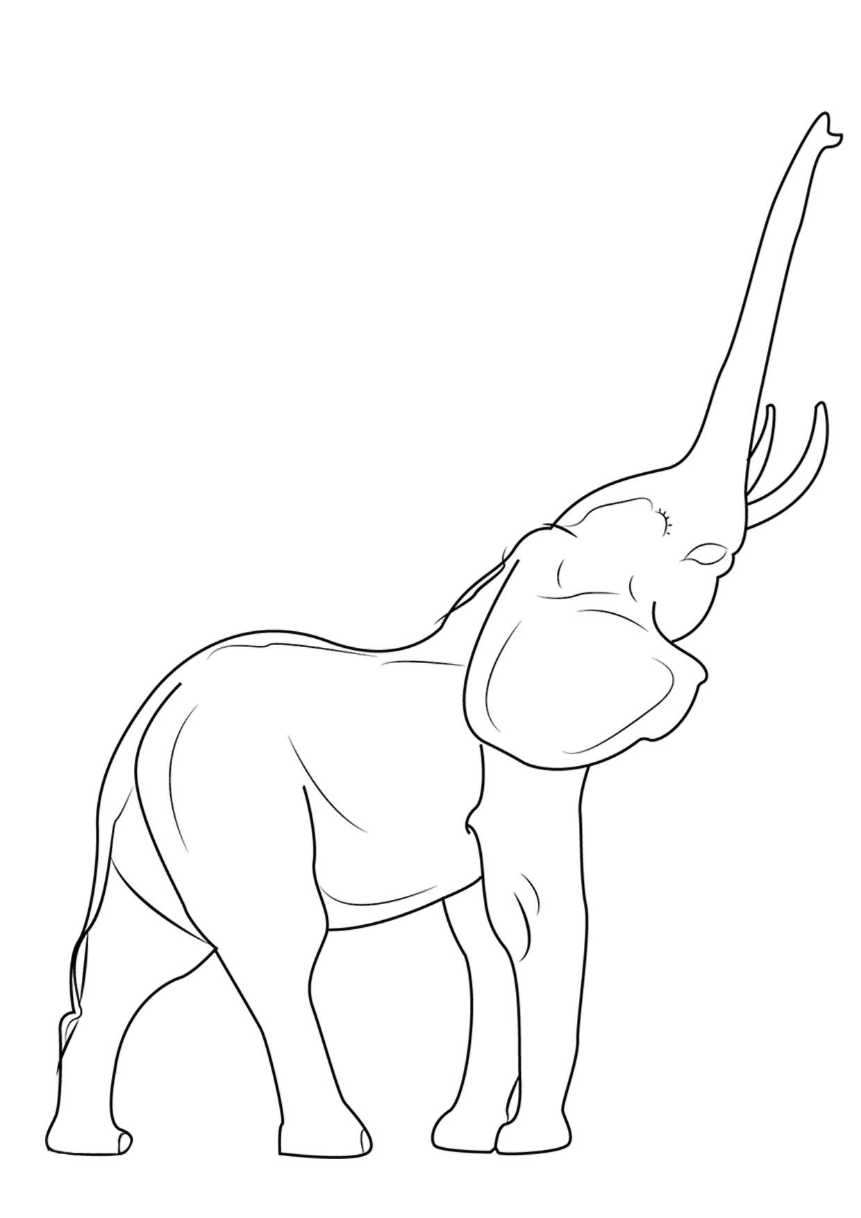 Disegno di elefanti da colorare 04