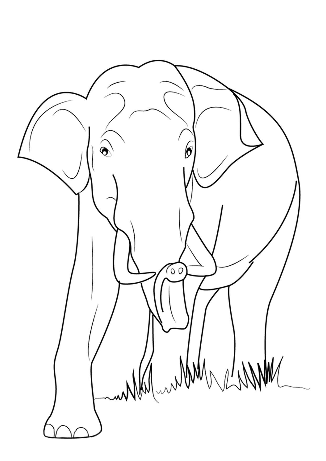 Disegno di elefanti da colorare 05