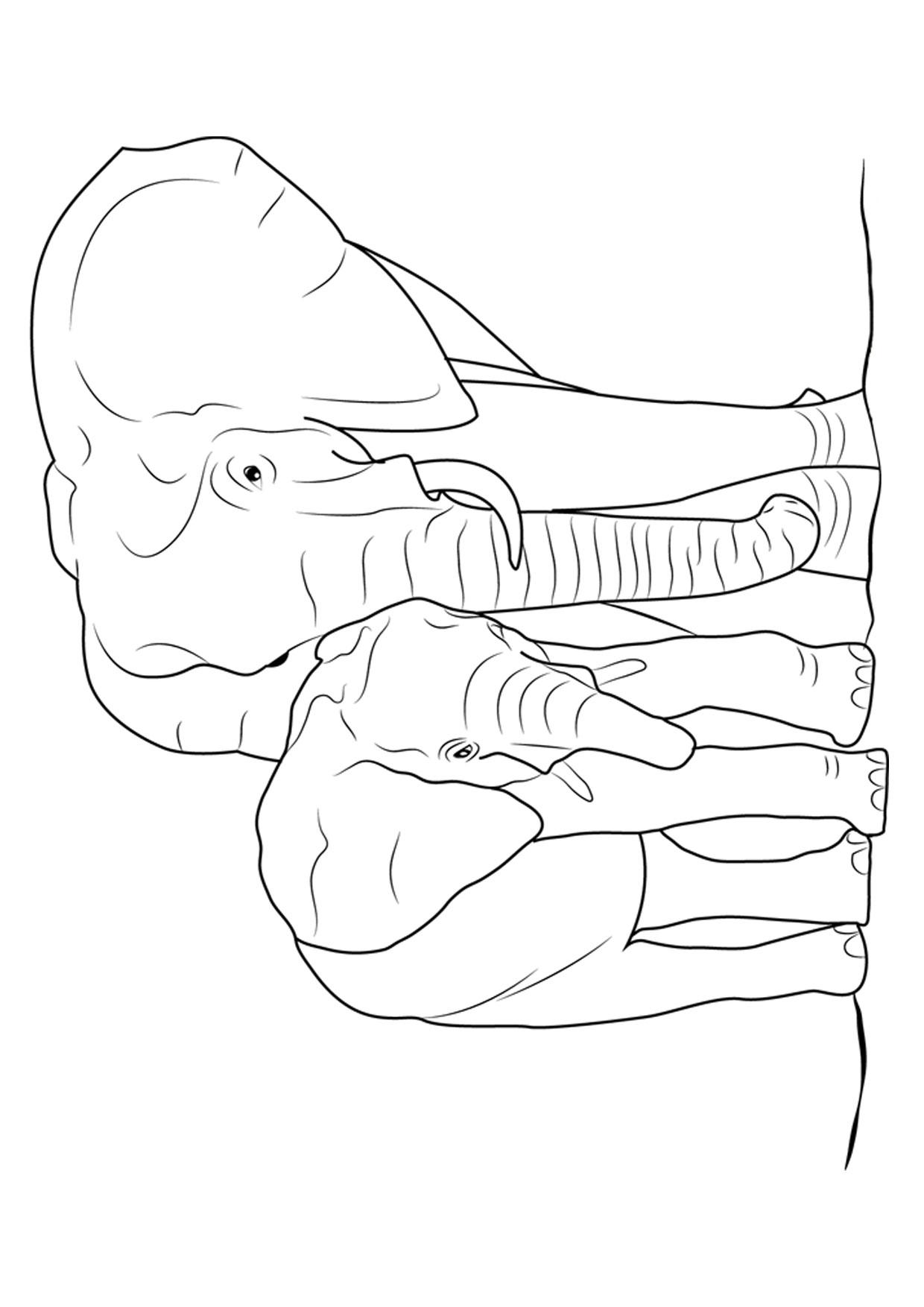 Disegno di elefanti da colorare 07