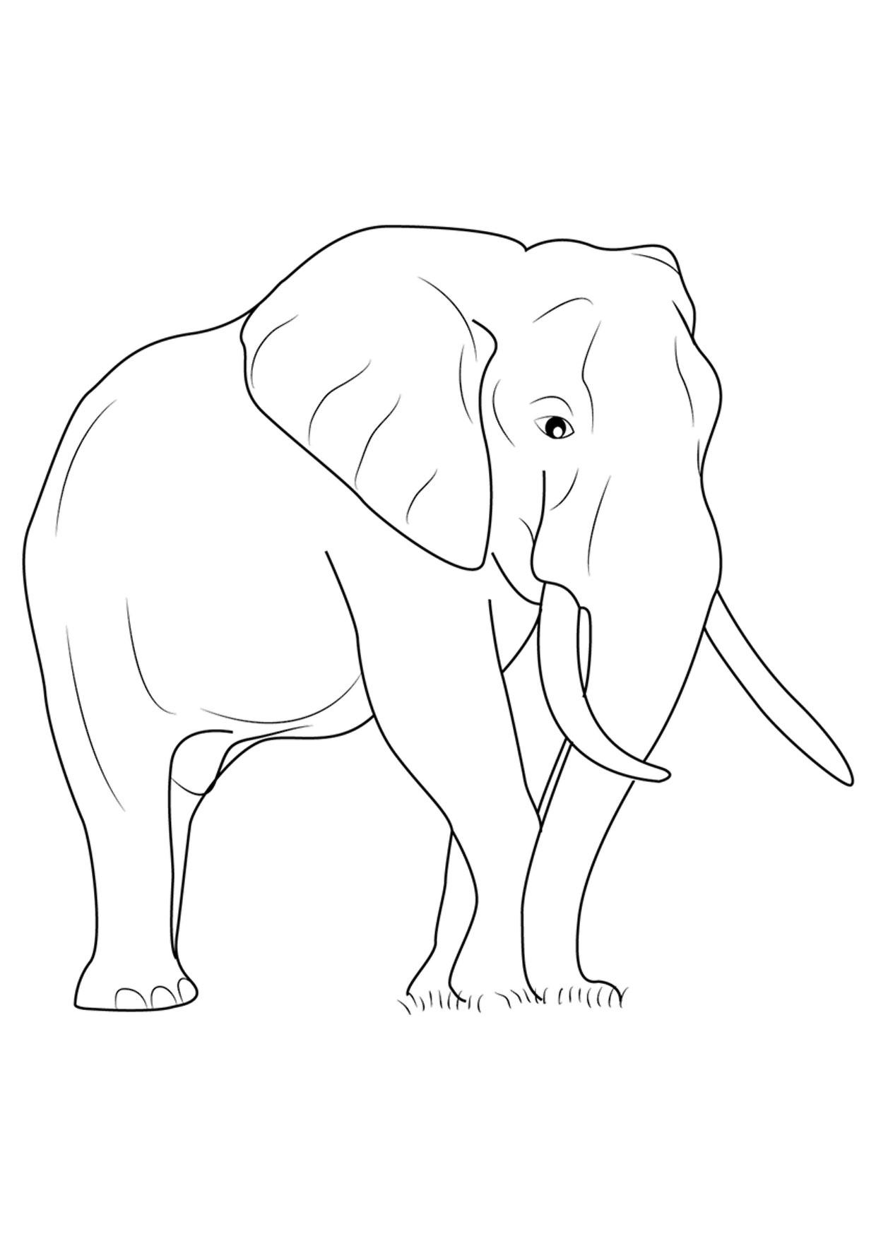 Disegno di elefanti da colorare 11