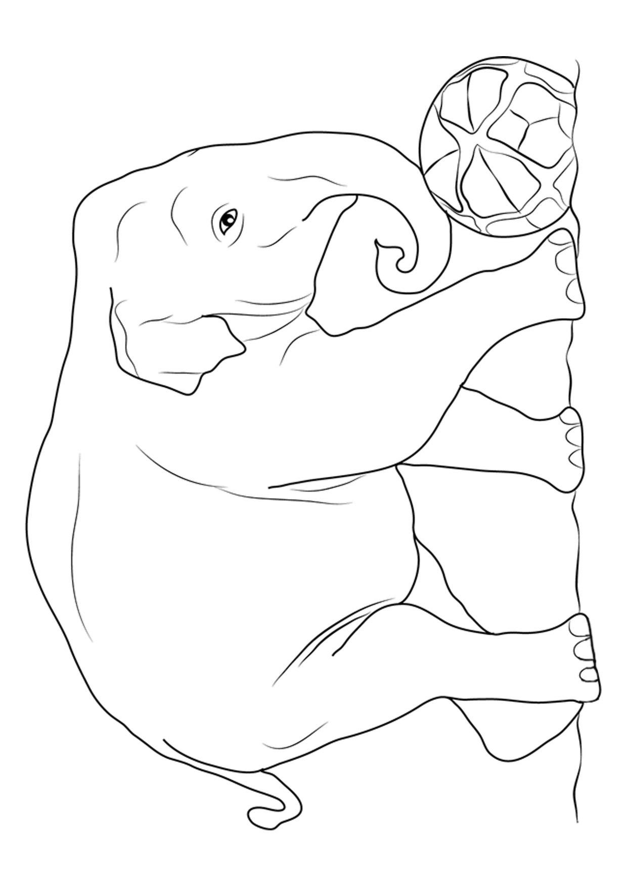 Disegno di elefanti da colorare 13