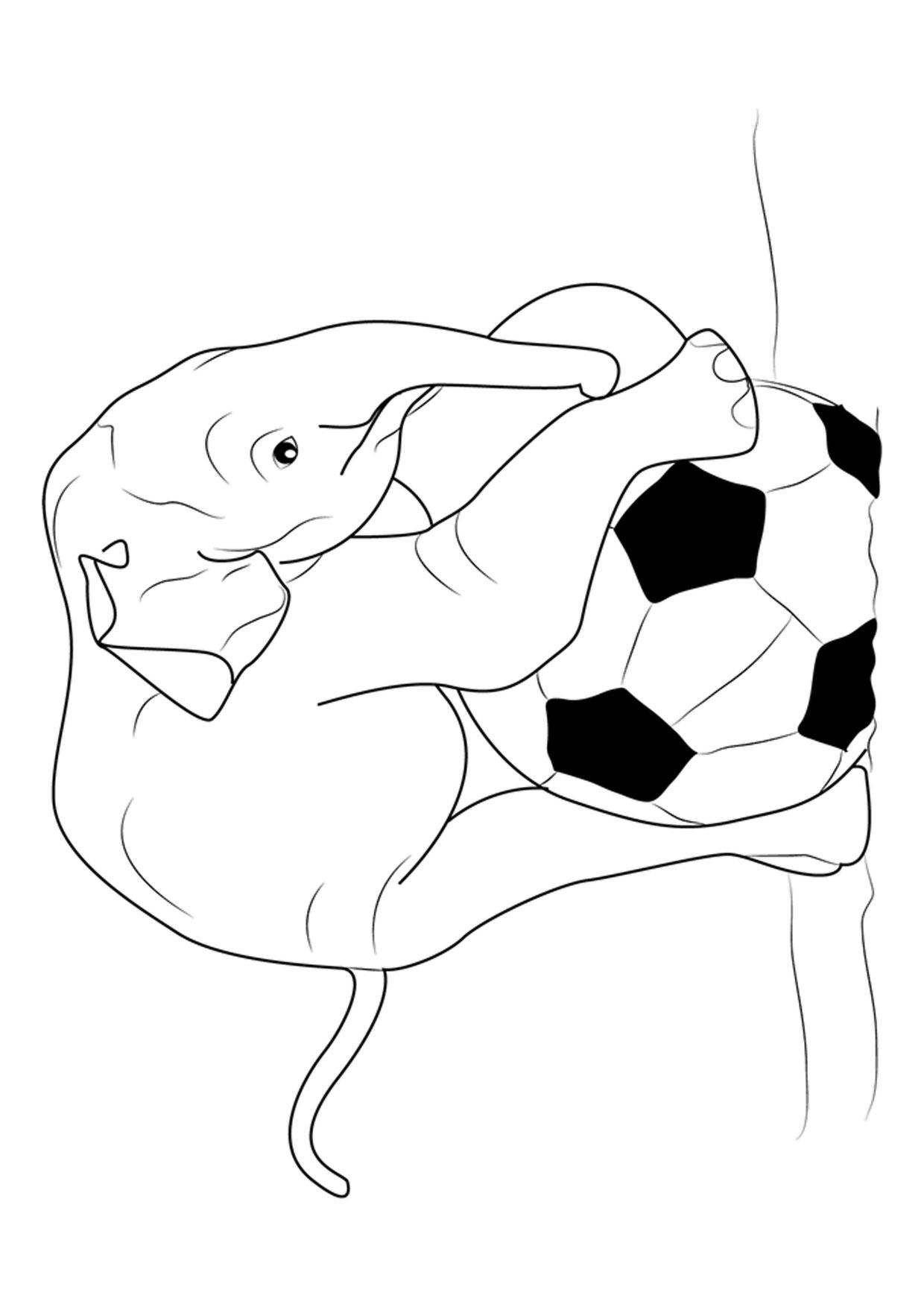 Disegno di elefanti da colorare 16