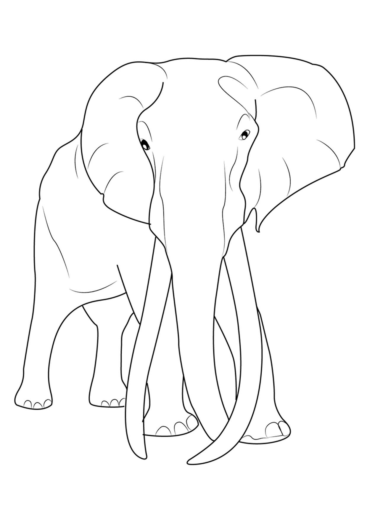 45 Disegni Di Elefanti Da Colorare Pianetabambini It